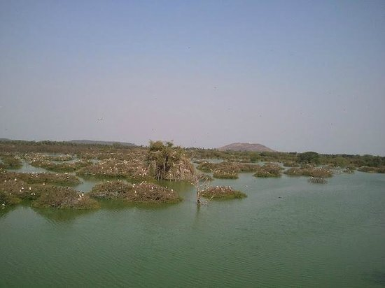 Vedanthangal Bird Sanctuary : View