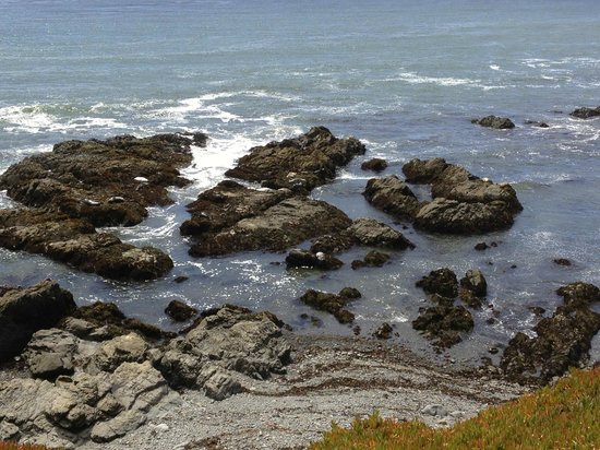 Fiscalini Ranch Preserve: Seals Lying on the Rocks
