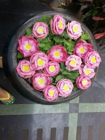 Bopha Siem Reap Boutique Hotel: lotus pond
