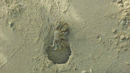 Embudu Village: crab