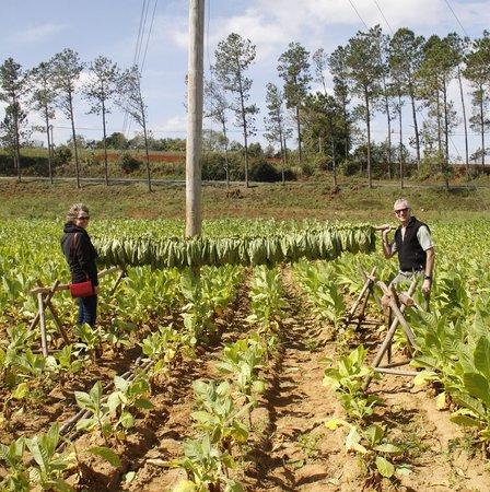Tobacco Plantation Tour Cuba