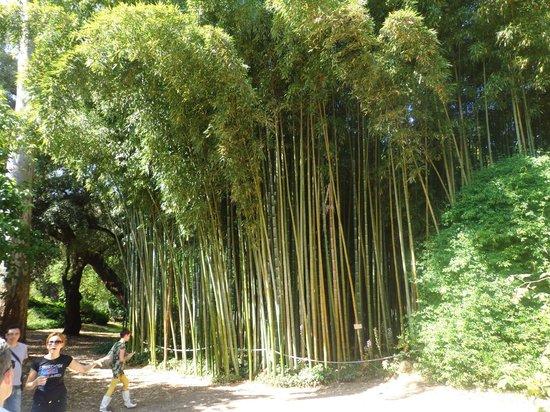 Canne Bamb Picture Of Giardino Di Ninfa Monumento