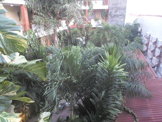 La Cour Hotel Cooper : Tropical