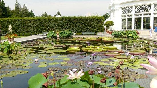 Lake Picture Of New York Botanical Garden Bronx