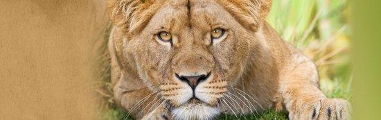 Peaugres, ฝรั่งเศส: Bienvenue dans le plus grand parc animalier de Rhône Alpes !