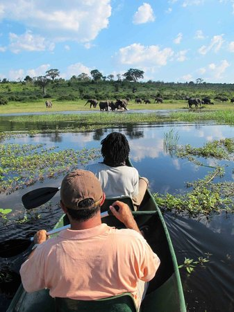 Camp Chobe: Kayaking on the river