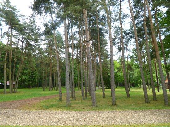 Landal Mooi Zutendaal: Il boschetto