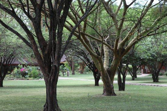 Keekorok Lodge-Sun Africa Hotels: саванна на территории отеля