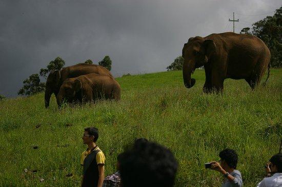 Ambady Estate: Meet a family of wild elephants