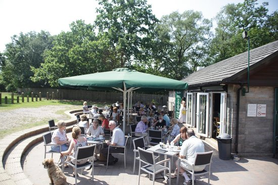 Customers enjoying outside dining at Blackroot Bistro, Sutton Park