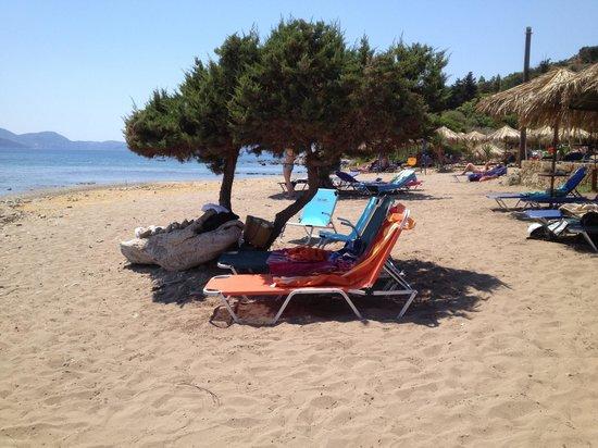 Daphni Nesting Beach