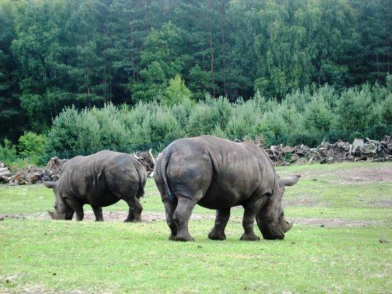 Serengeti-Park Hodenhagen: Gepflegte Anlagen