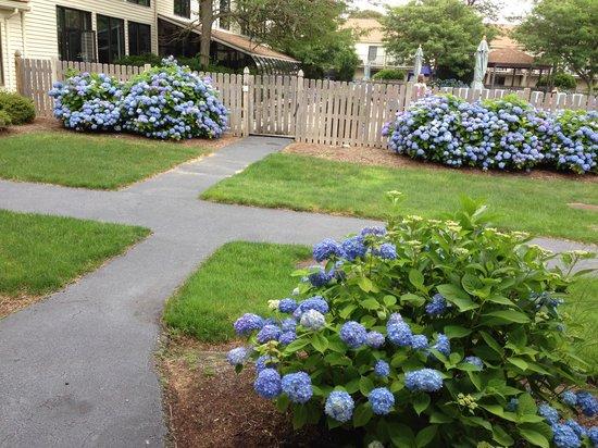 All Seasons Resort: courtyard