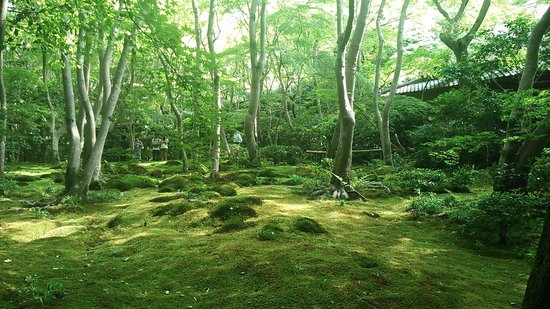 Akishinodera Temple: 門前の庭