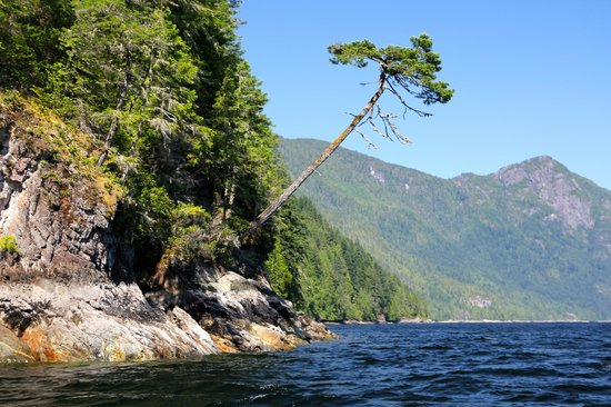 Egmont, Canadá: verdant forests come down to the ocean