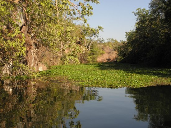 Musango Safari Camp: Ausflug auf der privaten Konzession