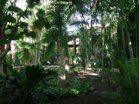 Hacienda Xcanatun : Walking path