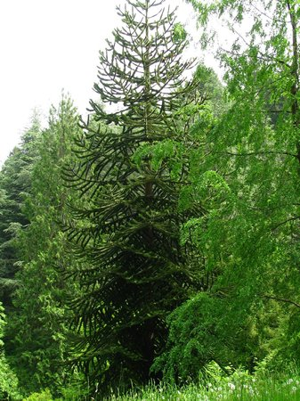 Hoyt Arboretum: Bäume aus aller Welt