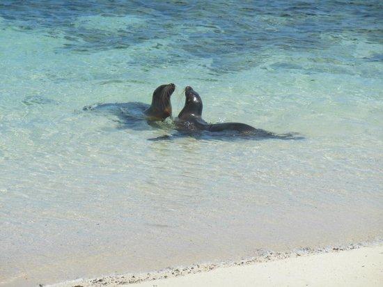 Casa Iguana Mar y Sol: Sea Lions at Lover's beach