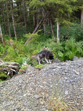 Glacier Bay's Bear Track Inn: Bandit, hiking by BearTrack