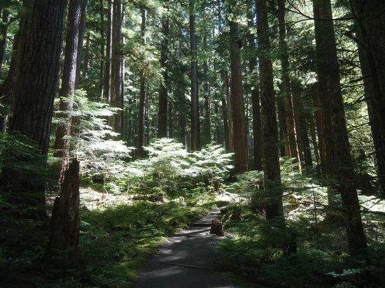 Sol Duc Falls: Beautiful easy hike to the falls