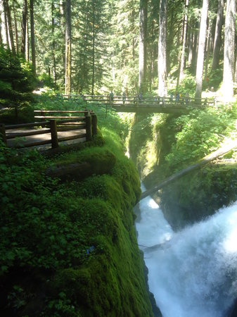 Sol Duc Falls: View looking back