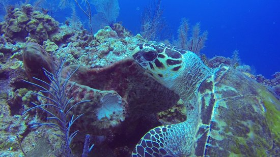 Pirates Point Resort: Sea Turtles on every dive