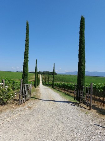 Time Around Tuscany : What a view at La Braccesca