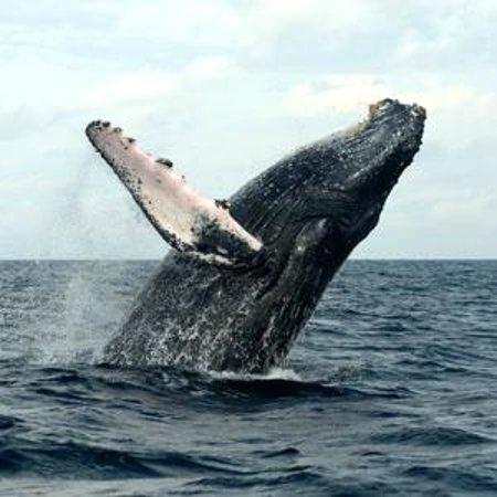 Reserva Aguamarina Hotel y Cabanas: Avistamiento de Ballenas