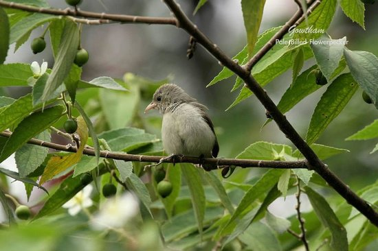 The Nest Inn: Flowerpecker- The smallest bird in India..Spotted in the trees of the resort