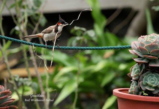 The Nest Inn: BulBul spotted in d gardens