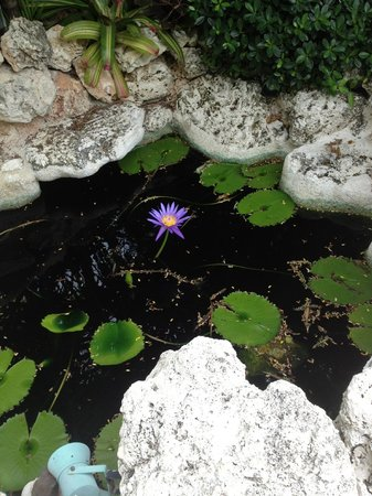 Kona Kai Resort, Gallery & Botanic Garden: Blue water Lilly in the front entrance