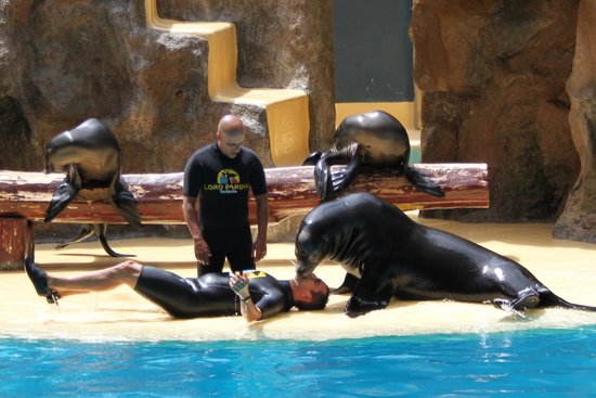 Loro Parque : attempt to revive the trainer! the best moment in the whole park!