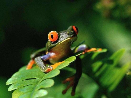Reserva Aguamarina Hotel y Cabanas: Parte de nuestra Fauna