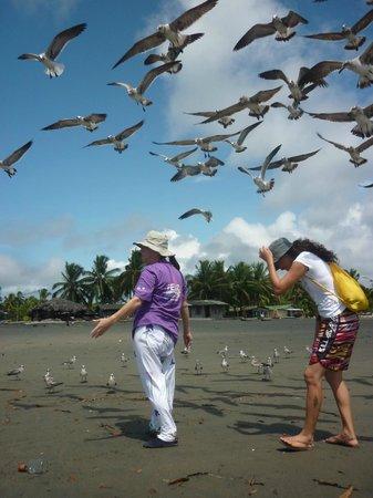 Reserva Aguamarina Hotel y Cabanas: Temporada Gaviotas