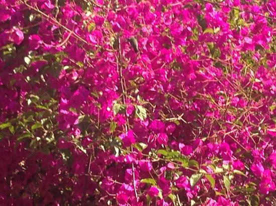 Wyndham Garden Ventura Pierpont Inn: Hummingbird