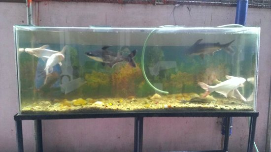 Ashtamudi Homestay: Fish aquarium in the sitting area