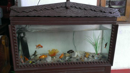 Ashtamudi Homestay: Fish aquarium in the sitting area