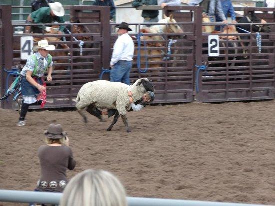 Snowmass Rodeo: Mutton rider