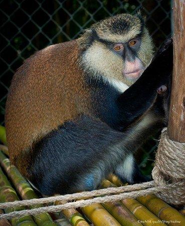 Emerald Coast Wildlife Refuge Zoological Park: Ike, Mona Guenon