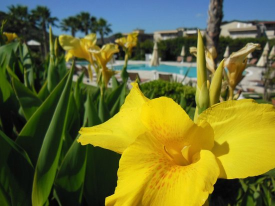Alcantara Resort: Blick auf den Pool durch die sehr gepflegte Gartenanlage