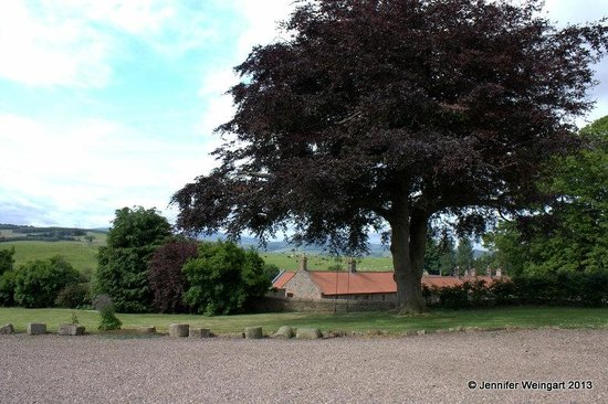 East Horton Farmhouse: Beautiful tree with a swing in the front yard and wonderful view