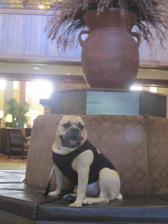 MCM Elegante Lodge & Resort : NICE lobby area....and dog friendly throughout the property