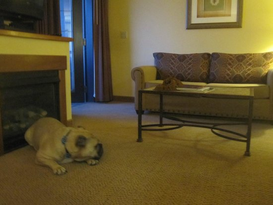 MCM Elegante Lodge & Resort : Sitting area in our suite.  Cozy fireplace just for Travelin' Jack to enjoy.
