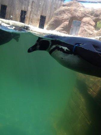 Cornish Seal Sanctuary: Add a caption
