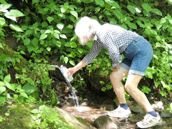 Upper Tremont Road in Great Smoky Mountains National Park : spring water