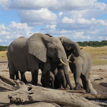 Wilderness Safaris Davison's Camp: Watering hole