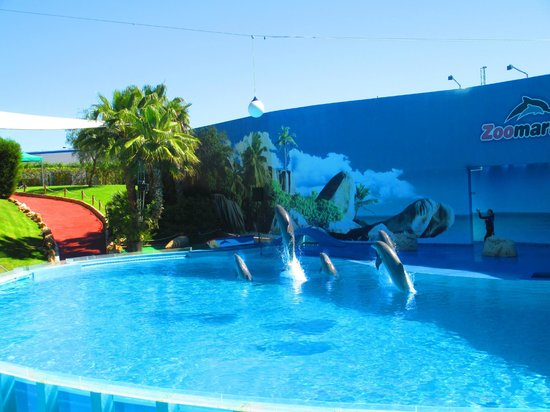 Villa Feliz Apartments: Dolphin show at Zoomarine