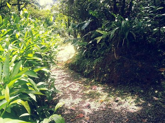 Villa Blanca Cloud Forest Hotel and Nature Reserve: Hiking trail.