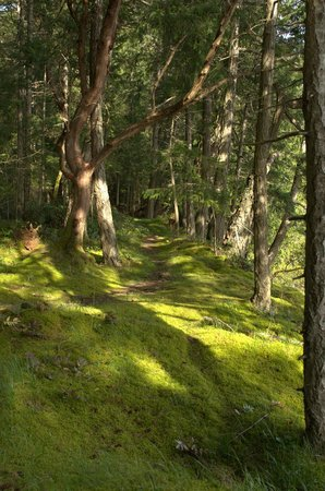 Nanaimo, Canadá: Hike or ride your bike through the trail systems